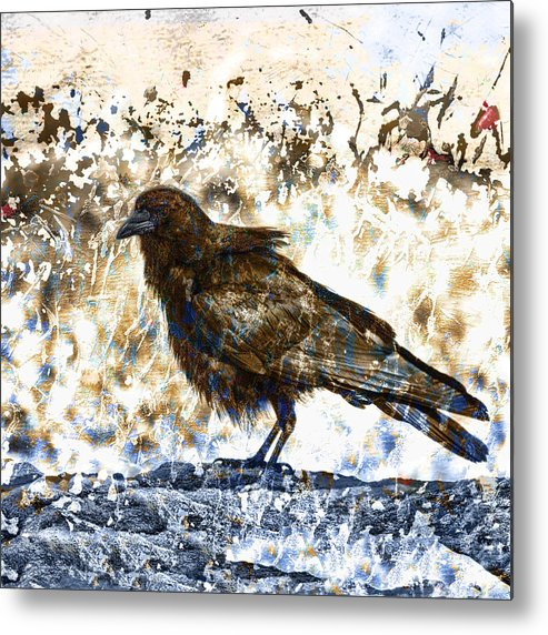 Crow Metal Print featuring the photograph Crow On Blue Rocks by Carol Leigh