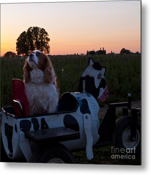 Wooden Shoe Metal Print featuring the photograph Dog In Cow Wagon by Mandy Judson