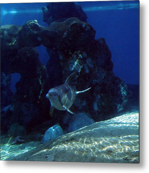 Dolphin Fish Aquatic Life Water Aquarium Sea Sandy Shore Rock Reef Metal Print featuring the photograph Dolphin by Andrea Lawrence