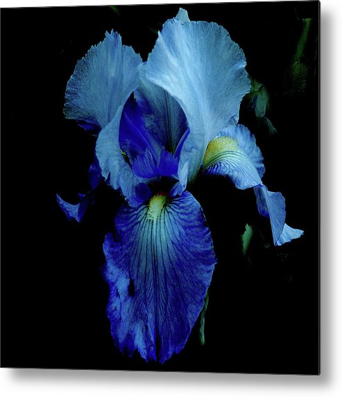 Iris Metal Print featuring the digital art Dramatic by Janet Duffey