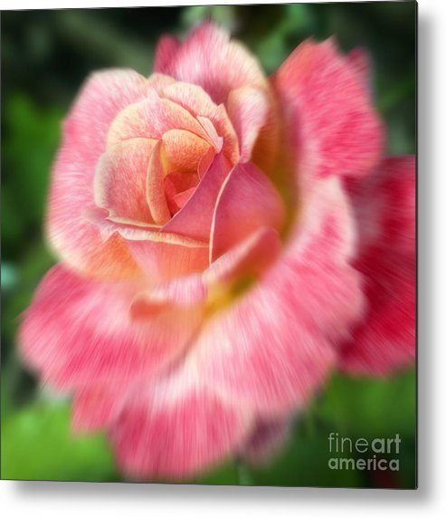 Rose Metal Print featuring the photograph Dreamy Rose by Jeannie Burleson