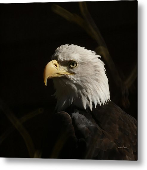 Animal Metal Print featuring the photograph Eagle Profile 2 by Ernie Echols