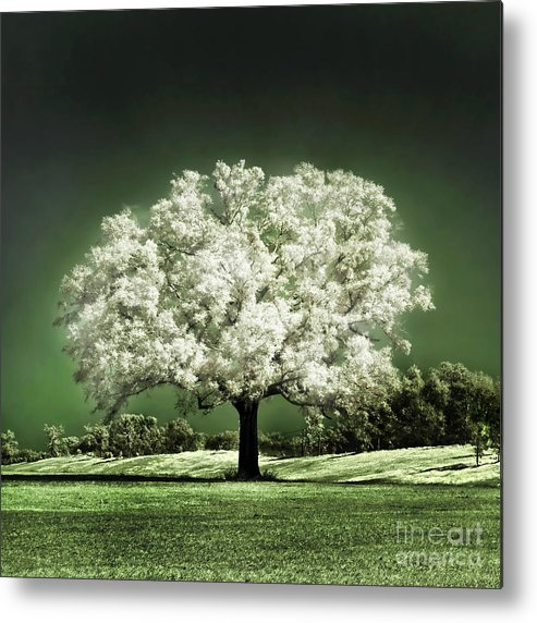 Baby Oak Tree Emerald Meadow Hugo Cruz Infrared Ir Fine Art Photography Infra Red Glowing Magical Ethereal Life Passion Nature Green Grass Jade Magnolia Cherry Blossom Metal Print featuring the photograph Emerald Meadow Square by Hugo Cruz