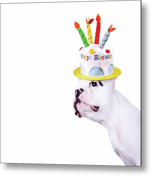 Square Metal Print featuring the photograph French Bulldog With Birthday Cake by Maika 777