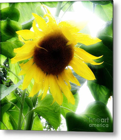 Sunflower Metal Print featuring the photograph Golden Beauty by Idaho Scenic Images Linda Lantzy