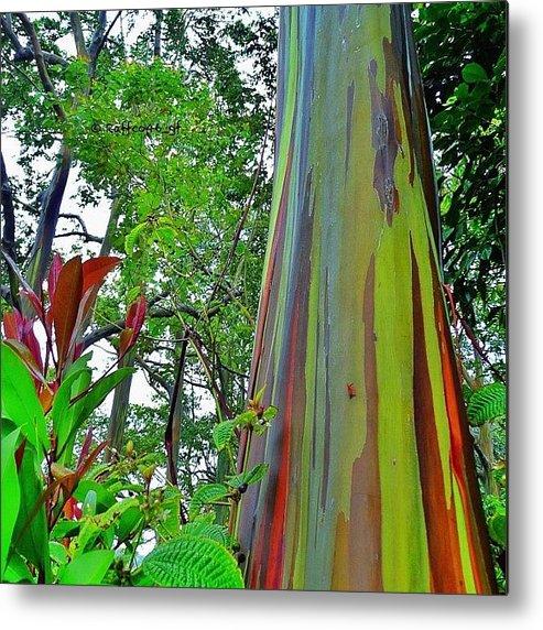 Instagram Metal Print featuring the photograph Good Morning Peeps, Rainbow Eucalyptus by Raffaele Salera