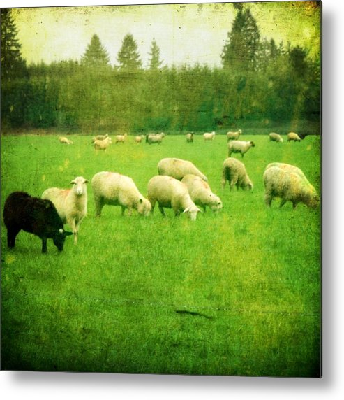 Nature Metal Print featuring the photograph Grazing by Cathie Tyler