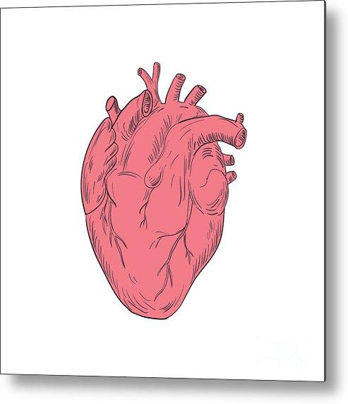Human Heart Anatomy Drawing Metal Print By Aloysius Patrimonio