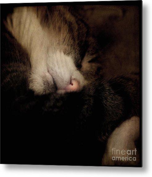 Cat Metal Print featuring the photograph Just Sleep by Angel Ciesniarska