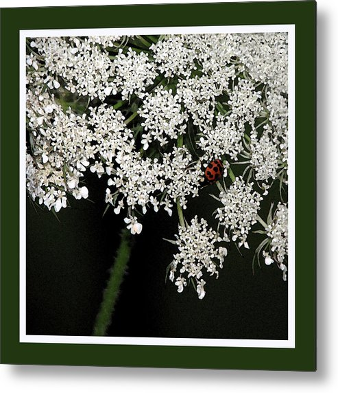 Ladybug Metal Print featuring the photograph Lady On Lace by Ginger Howland
