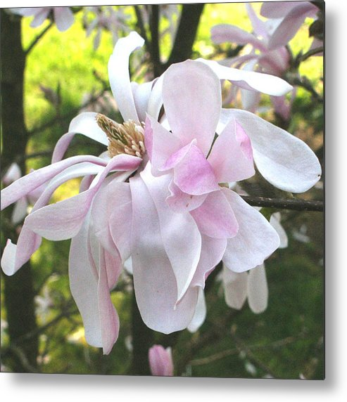 Flower Metal Print featuring the photograph Little English Flower by Sarah Madsen