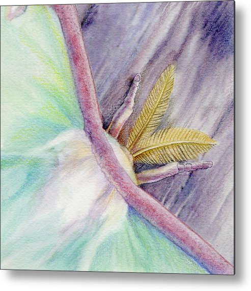 Luna Moth Metal Print featuring the painting Luna Moth by Mindy Lighthipe