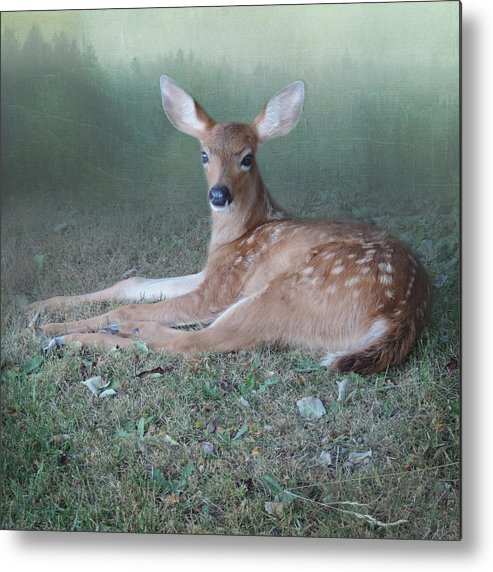 Surreal Deer Metal Print featuring the photograph Mystic Fawn by Sally Banfill