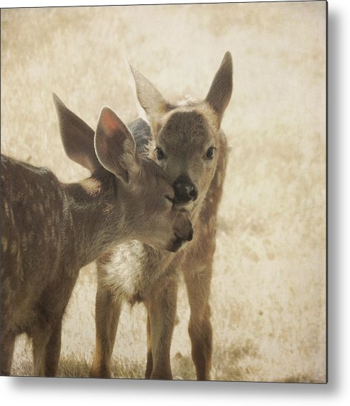 Fawns Metal Print featuring the photograph Nuzzle by Sally Banfill