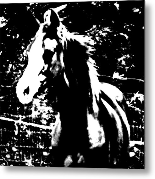 Horse Metal Print featuring the photograph Only A Yearling by Donna Thomas
