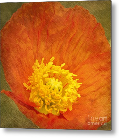 Poppy Metal Print featuring the photograph Orange Poppy by Carrie Cranwill