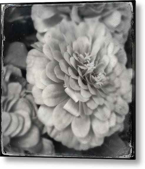 Flower Metal Print featuring the photograph Paper Mache by Kathleen Messmer