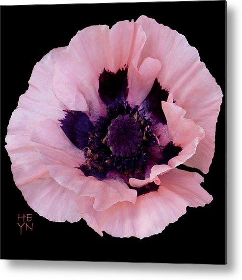 Cutout Metal Print featuring the photograph Peach Poppy - Cutout by Shirley Heyn