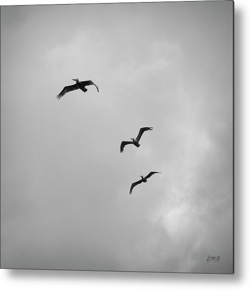 Animal Metal Print featuring the photograph Pelicans In Flight I Bw by David Gordon