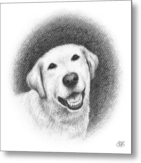Phoebe Metal Print featuring the drawing Phoebe by Conor O'Brien