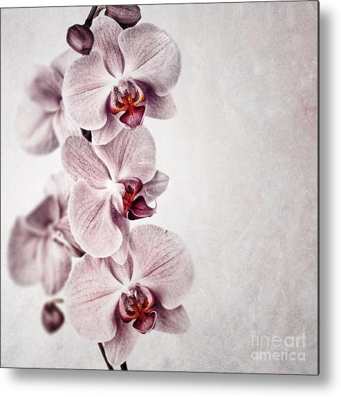 Aged Metal Print featuring the photograph Pink Orchid Vintage by Jane Rix