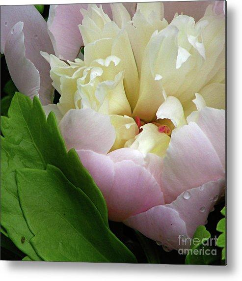 Flower Metal Print featuring the photograph Pretty Petals by Deborah Johnson