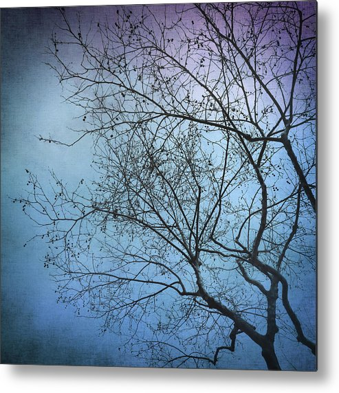 Tree Metal Print featuring the photograph Princesa by Zapista