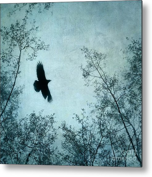 Raven Metal Print featuring the photograph Spread Your Wings by Priska Wettstein