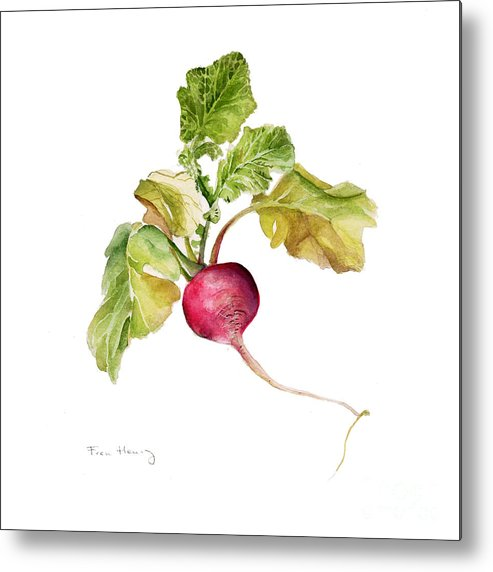 Square Metal Print featuring the painting Radish by Fran Henig