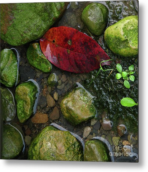 Leaf Metal Print featuring the photograph Red And Rocks by Deborah Johnson