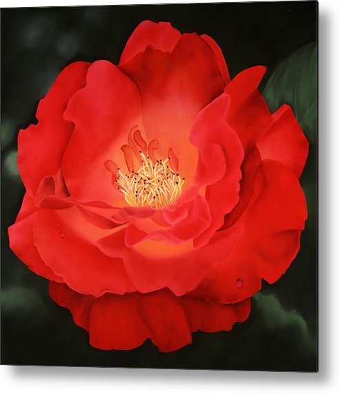 Flower Metal Print featuring the painting Red Rose by Ora Sorensen