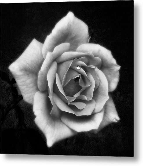 Beautiful Metal Print featuring the photograph Rose In Mono. #flower #flowers by John Edwards