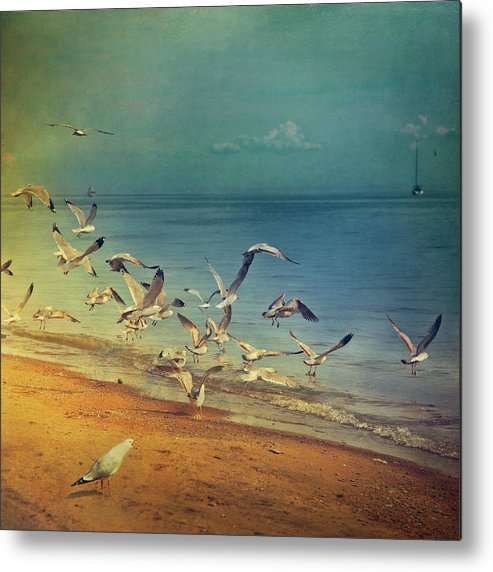 Square Metal Print featuring the photograph Seagulls Flying by Istvan Kadar Photography