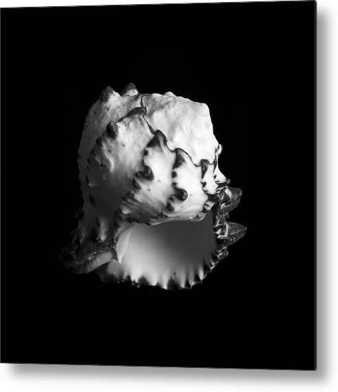 Sea Metal Print featuring the photograph Shell No. 7 by Henry Krauzyk
