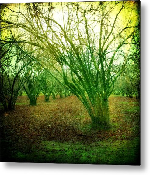 Trees Metal Print featuring the photograph Shinning Through by Cathie Tyler