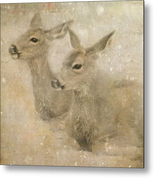 Deer Metal Print featuring the photograph Snow Fawns by Sally Banfill