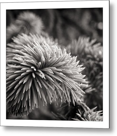 Uk Metal Print featuring the photograph Spikey by Stewart Waite