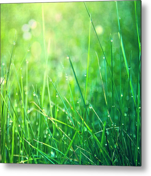 Square Metal Print featuring the photograph Spring Green Grass by Dirk Wüstenhagen Imagery