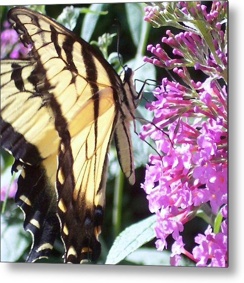 Swallowtail Butterfly Yellow Purple Flower Metal Print featuring the photograph Swallowtail by Anna Villarreal Garbis