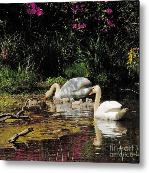 Swans Metal Print featuring the photograph Swans And Signets by Neil Doren