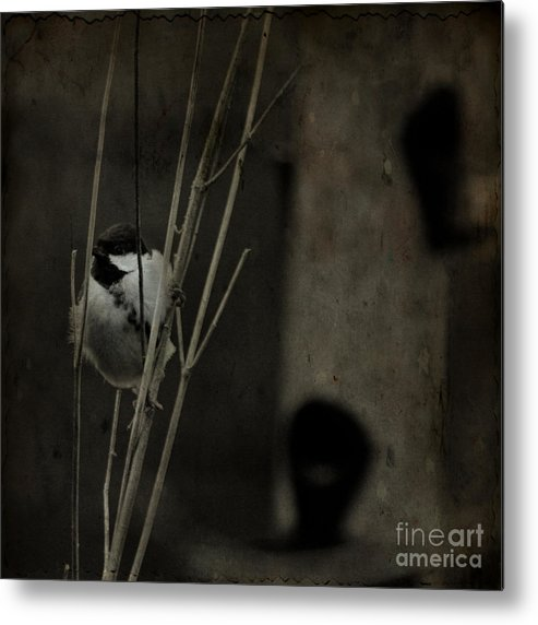 Tit Metal Print featuring the photograph The Great Tit by Angel Ciesniarska