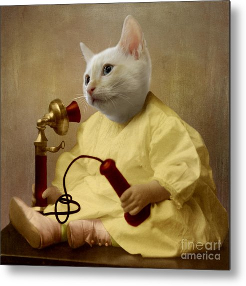 Kitten Metal Print featuring the photograph The Little Chatterbox by Martine Roch