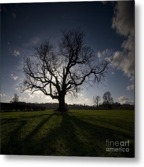Oak Metal Print featuring the photograph The Mighty Tree by Angel Ciesniarska