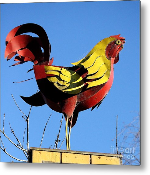 Rooster Metal Print featuring the photograph The Rooster . Square . 40d4622 by Wingsdomain Art and Photography