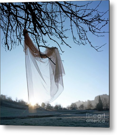 Bare Tree Metal Print featuring the photograph Transparent Fabric by Bernard Jaubert
