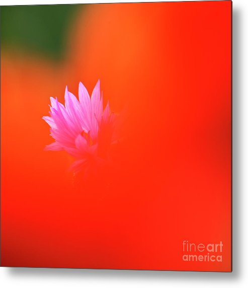 Cornflower Metal Print featuring the photograph Tucked Away by Heiko Koehrer-Wagner