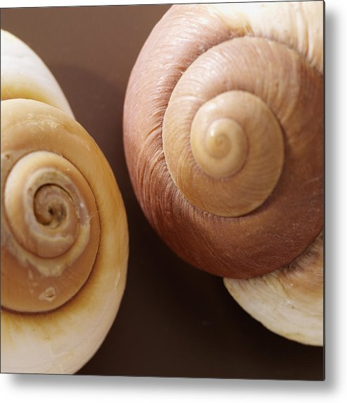 Two Brown Shells Metal Print featuring the photograph Two Brown Shells by Han Van Vonno