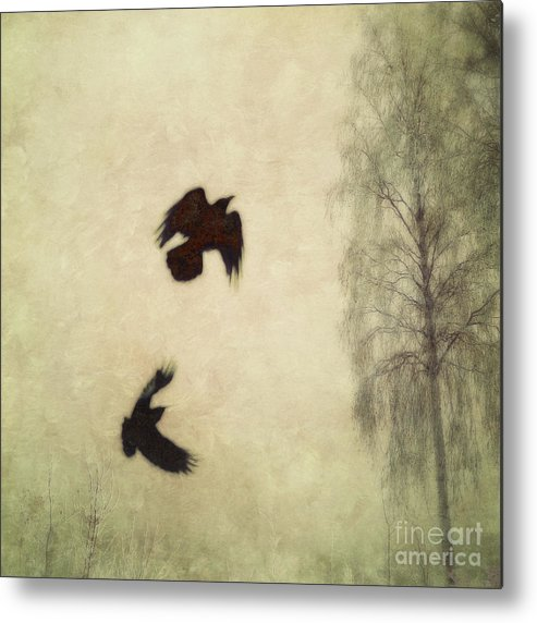Raven Metal Print featuring the photograph Untitled by Priska Wettstein