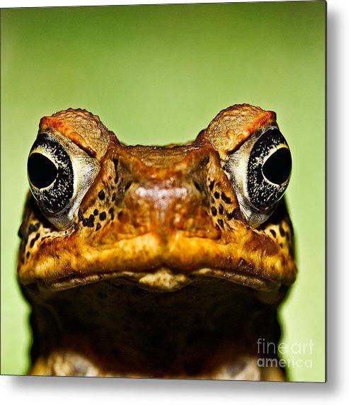 Amphibien Metal Print featuring the photograph Unwanted Intruder by Joerg Lingnau