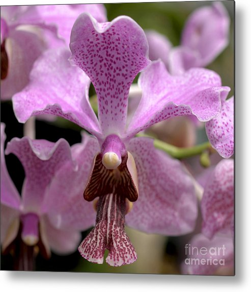 Orchid Metal Print featuring the photograph Vanda Macro 8778 by Terri Winkler